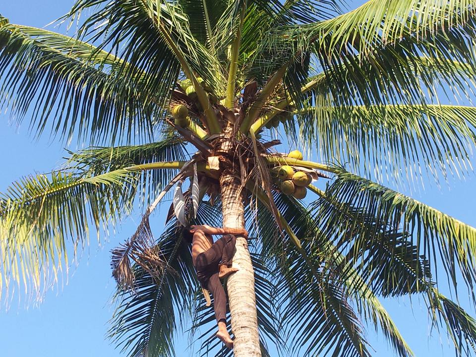 Pastor Gonzales shimmied up the coconut palm to bring us a drink.