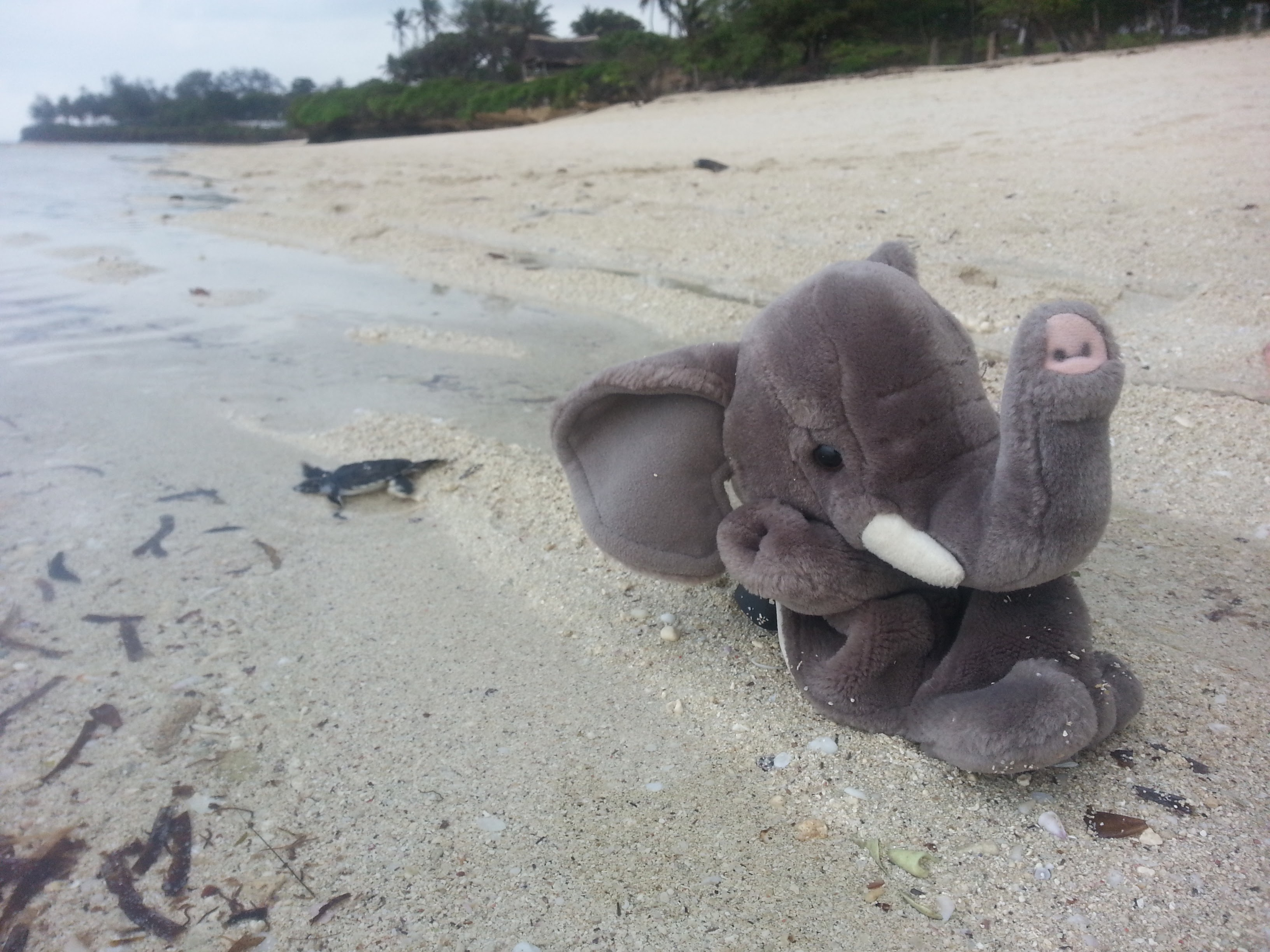 Nelly the Elephant (Twitter: @Nelly_Says) celebrated as the last baby turtle finally reached the ocean!