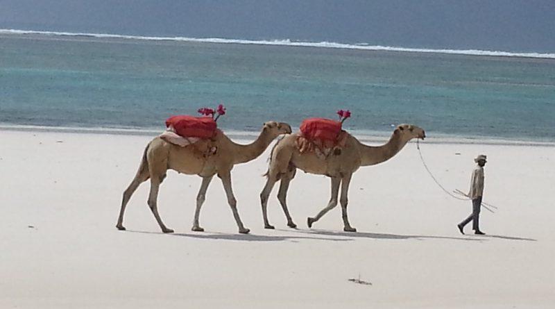 Camels Diani Beach